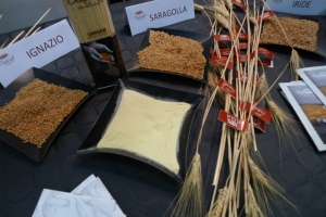 INDIGENOUS GRAINS FROM PUGLIA